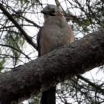 Uccelletti a maggio