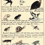 Gli animali e il tempo