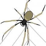 Il ragno nel prato