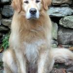 Il cane senza medaglia