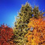 Filastrocca dell'autunno
