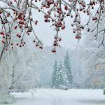 La mattina quando comincia a nevicare
