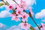 Filastrocche di Primavera