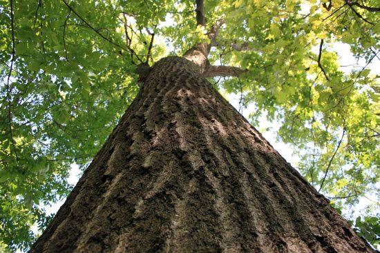 Filastrocche sugli alberi