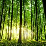 Poesie sugli alberi