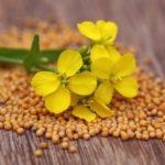 Il seme di senape