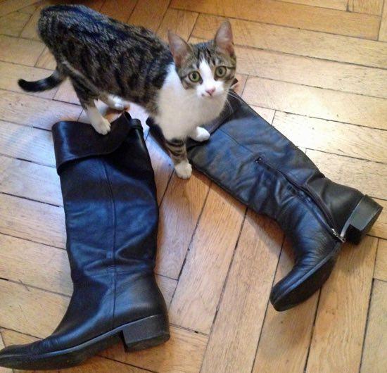gatto con gli stivali