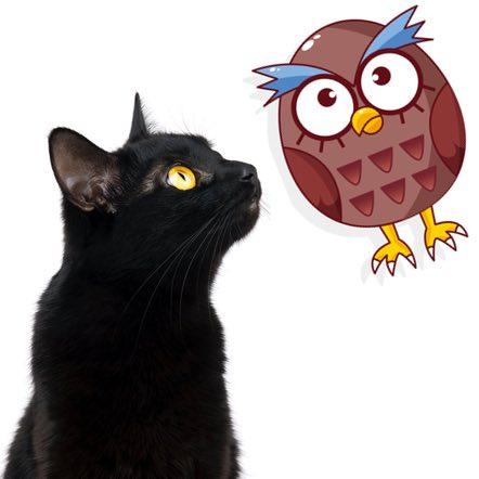 gufo e la gattina