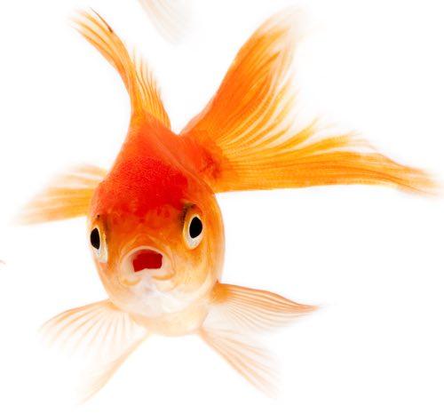 Un pesce strano