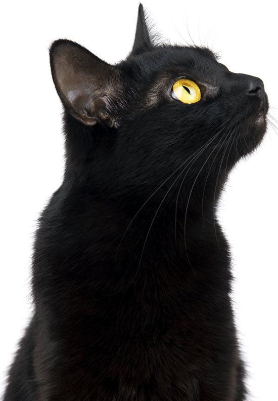 Il gatto dei misteri