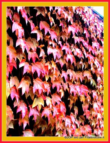 Foglie rosse, foglie gialle