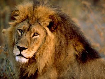Il leone e il moscerino
