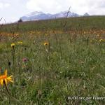 Canti di primavera