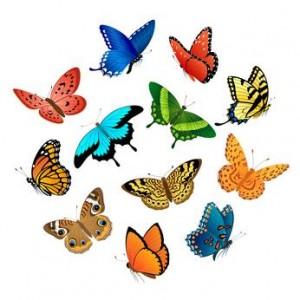 Farfalle e fiori