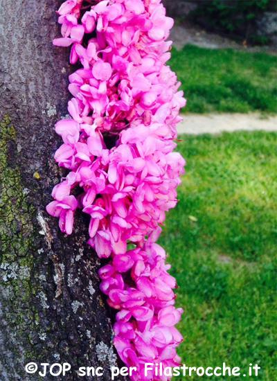 Bosco di primavera