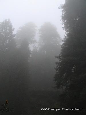 Nebbia rubacolori
