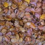 Vento d'autunno