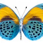 La farfalla e le libellule