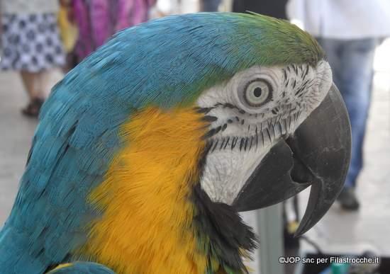 Nino il pappagallino