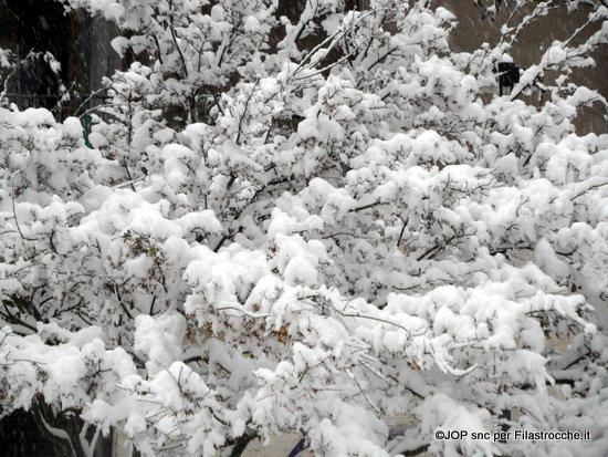 Fiori di neve