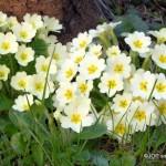Sentore di primavera
