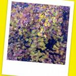 La filastrocca delle foglie