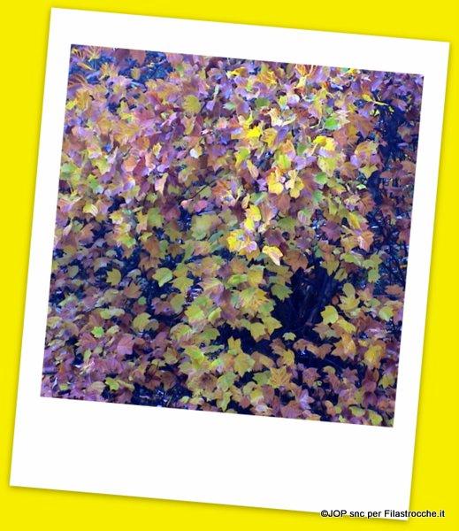 filastrocca delle foglie
