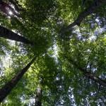 Foresta fischiona