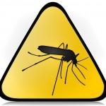 La zanzara Mariarosa