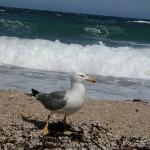 Lezione a distanza dal mare