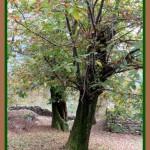 L'albero triste