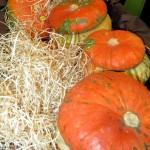 Le zucche di Halloween