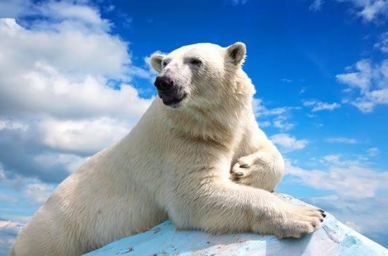 Il nuoto a orso