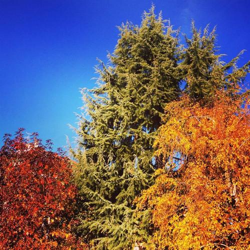 Il colore azzurro degli alberi