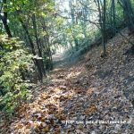 Bosco d'autunno