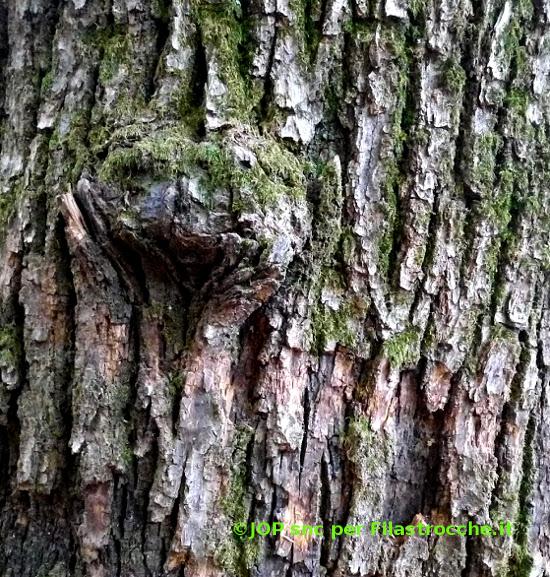 Han sradicato un albero