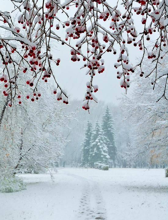 Ritorno dell'inverno