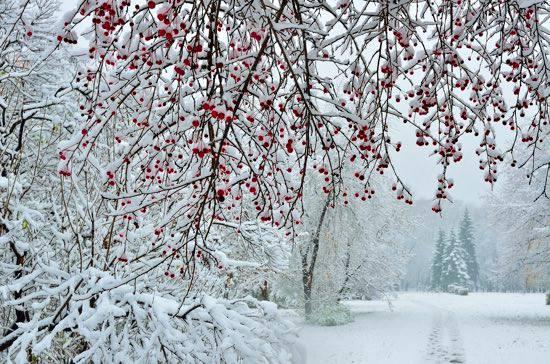 Inverno a Roma
