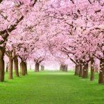 Canzonetta di Primavera