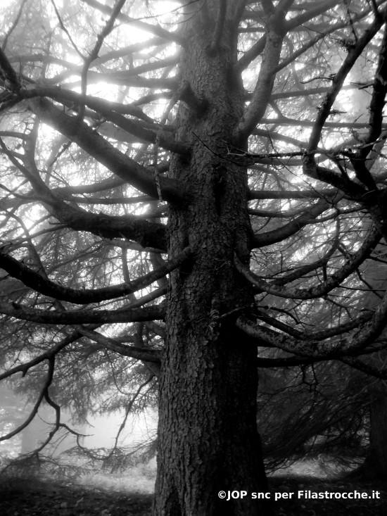 L'albero taciturno