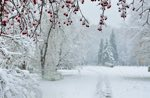 Poesie sull'Inverno
