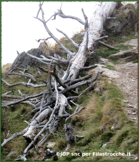 La quercia caduta