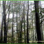 Buscaba el bosque Francisco