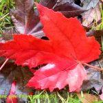 La danza delle foglie