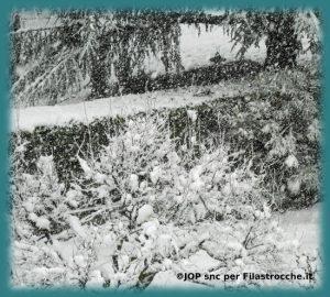 L'orfano (La neve)