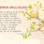 La Domenica dell'olivo