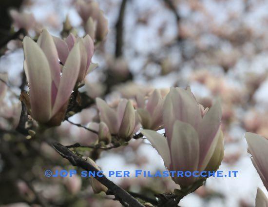 Primavera è sulla soglia