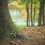 Ora l'autunno