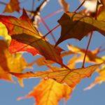 Girotondo delle foglie