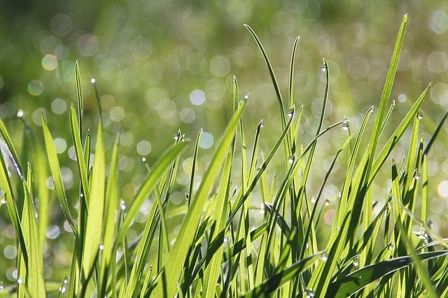 Disse un filo d'erba